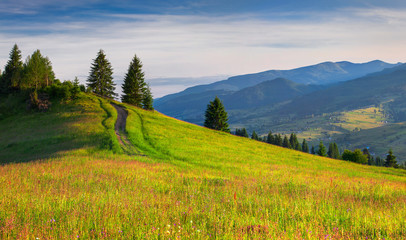 Beautiful summer landscape in the Carpathian mountains