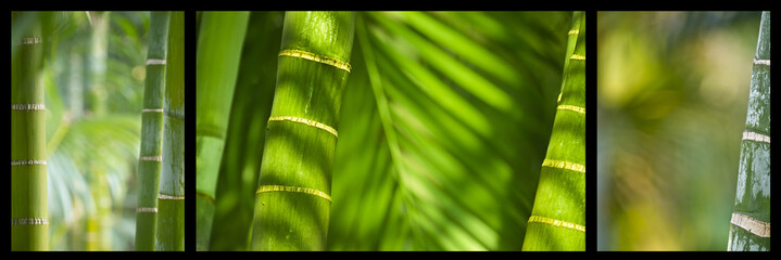 bamboo triptyque