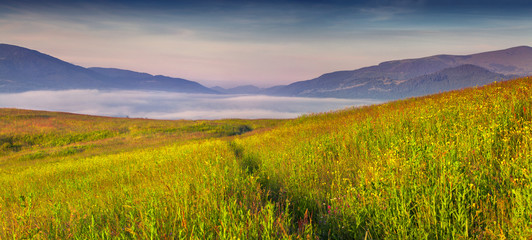Panorama of the foggy summer morning in the mountains