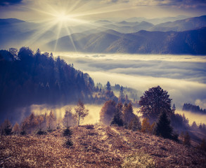 Foggy autumn morning in the mountains.