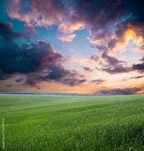 Deurstickers Droogte green field