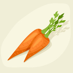 Stylized vector illustration of fresh ripe carrots.