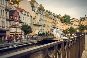 Karlovy Vary, dove