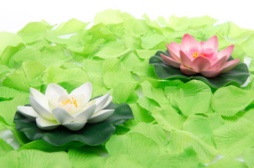 Water lilies surrounded by green petals