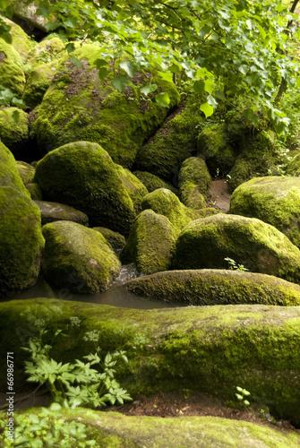 canvas print picture Nature Reserve Doost