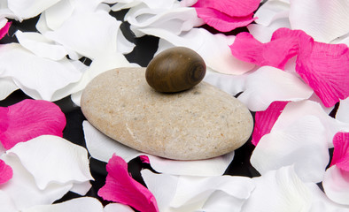 Pebbles surrounded by white and pink petals