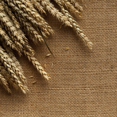 Ears of wheat on jute background