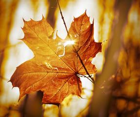 dry autumn leaf