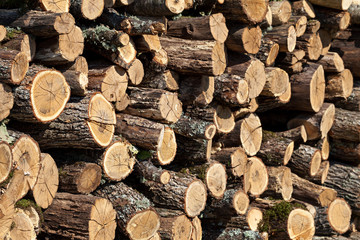 Firewood stacked in the woodpile