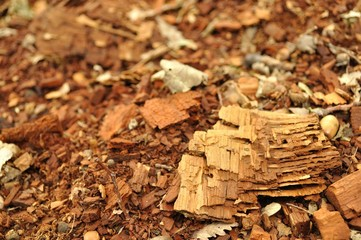 Texture of fragments of wood