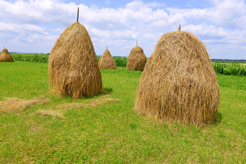 Hay in stacks