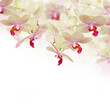 tender pink orchid flowers with butterflies - 66994775