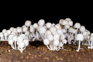 Nature mushroom at Kaengkrajarn national park,Thailand