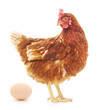 Leinwanddruck Bild - Hen and Egg