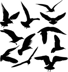 set of eleven gull black silhouettes