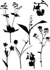 seven black wild flowers on white illustration