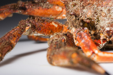 Leg, shell, European spider crab, mimicry, imitation, shellfish,