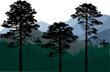 three pine trees in mountain landscape