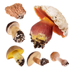Collage  mushrooms types  isolated on a white background