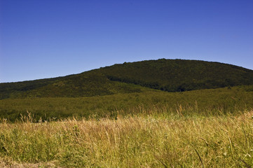 view of a hill covered with green forest