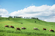 Beautiful alpine landscape with green hills and a herd of cows