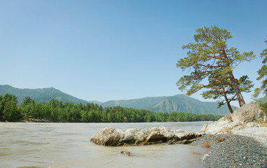 Beautiful landscape with pine tree on the river bank