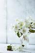 Still Life with Jasmine Flowers