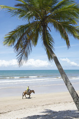 Nordeste Bahia Brazil Beach with Horse and Baskets
