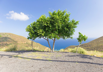 view of the trees on the background of the Mediterranean Sea