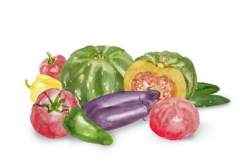 いろいろな夏野菜の水彩イラスト