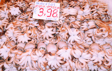 Calamary on fish market