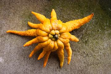 Buddha's hand citrus fruit