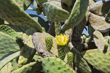 Green Cactus flowers and thorns