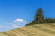 paysage campagnard