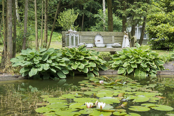 pond with water lily hosta plants