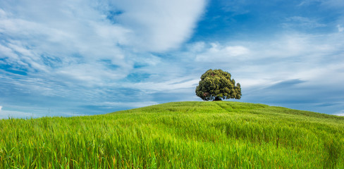 tree in the green field
