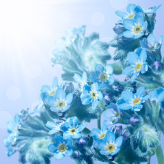 Forget-me-not flowers on blurred background with bokeh.