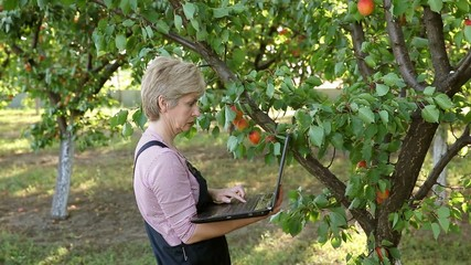 Agricultural expert inspect quality of apricot, using laptop