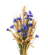 Leinwandbild Motiv Bunch of cornflowers and ears isolated on white background