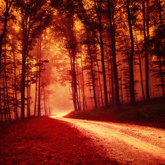 Red colored fantasy forest