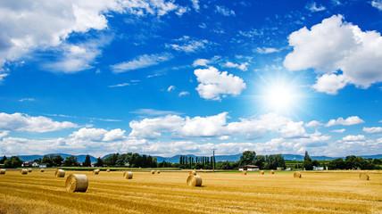 Weizenfeld in der Pfalz :)