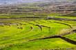Постер, плакат: rice terraces Bhutan