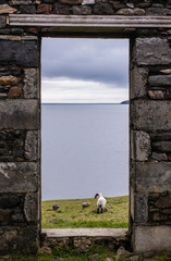 View of sea, pastures and lamb from a stone door of an old ruin