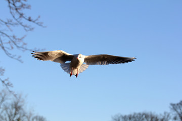 Flying bird in the park