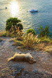 sunset on the island of Phuket. Dog sleeps on the beach