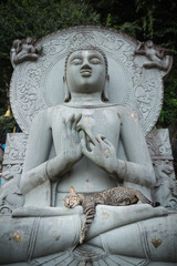 Cat sleeping on the lap Buddha statues.