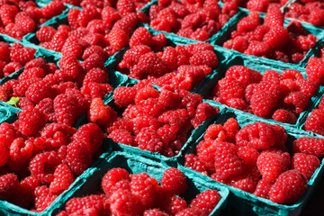 Bright Red Raspberries