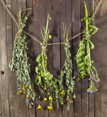 Dried healing herbs on string