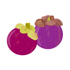 Mangosteens fruit vector