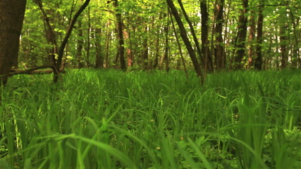 Green grass and wood. Slow motion